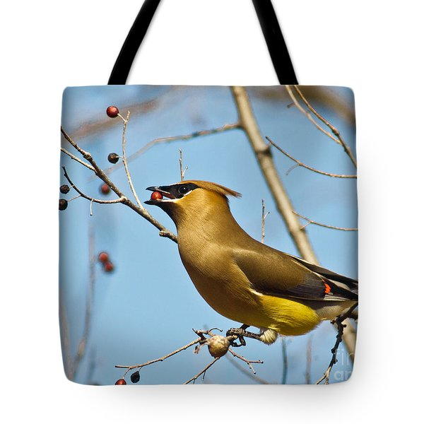 Cedar Waxwing With Berry Tote Bag by Robert Frederick
