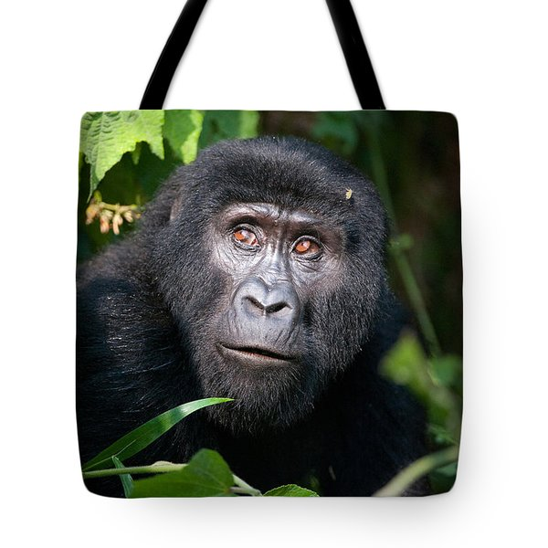 Close-up Of A Mountain Gorilla Gorilla Tote Bag