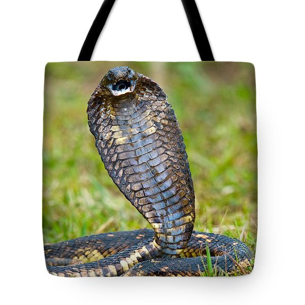 Close-up Of An Egyptian Cobra Heloderma Tote Bag