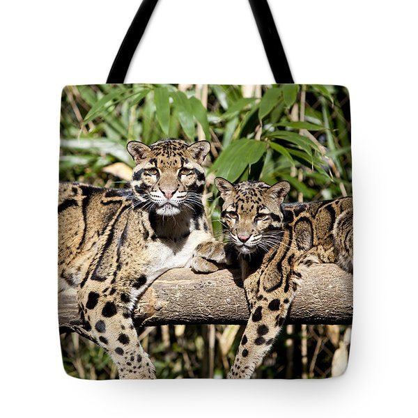 Tote Bag featuring the photograph Clouded Leopards by Brian Jannsen