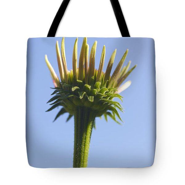 Cornflower Tote Bag by Tony Cordoza