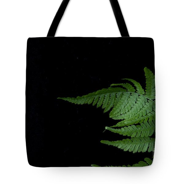 Tote Bag featuring the photograph Fern II by Alana Ranney