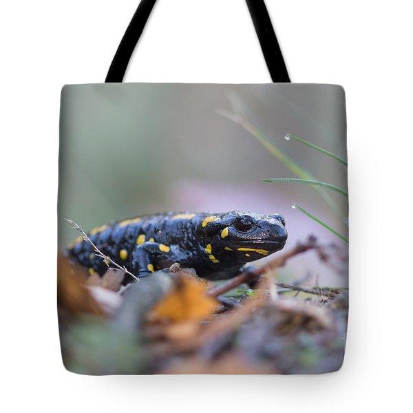 Fire Salamander - Salamandra Salamandra Tote Bag