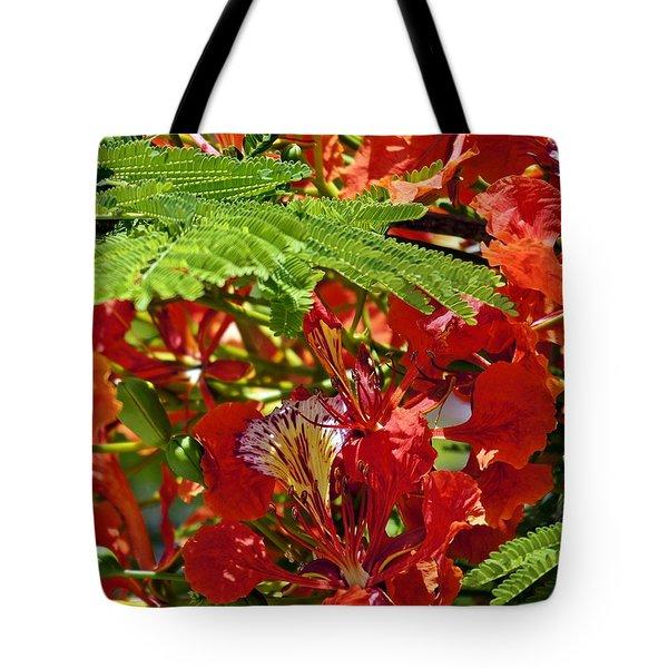 Tote Bag featuring the photograph Flamboyan by Lilliana Mendez