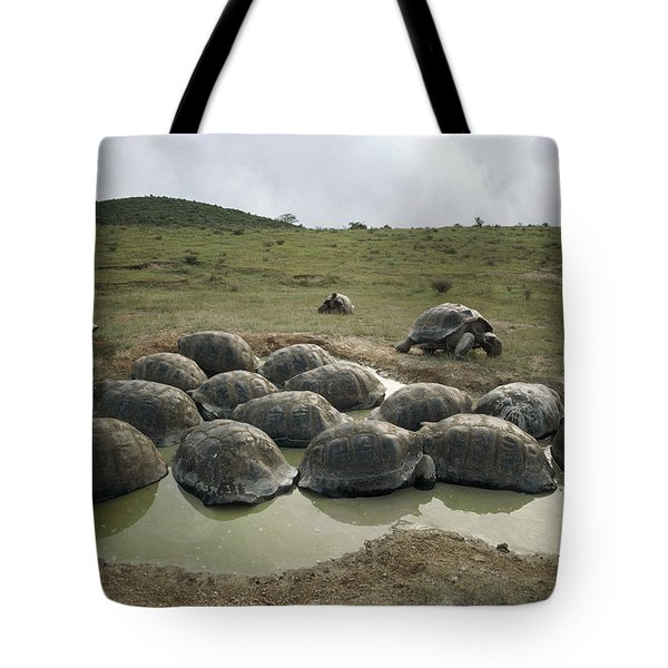 Galapagos Giant Tortoises Wallowing Tote Bag by Tui De Roy