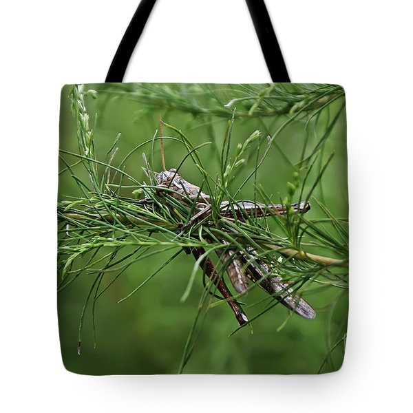 Tote Bag featuring the photograph Grasshopper by Olga Hamilton