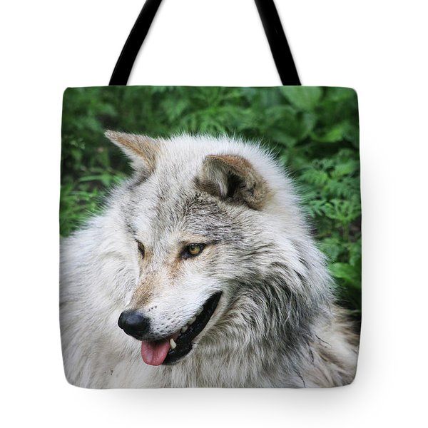 Tote Bag featuring the photograph Gray Wolf by Alyce Taylor