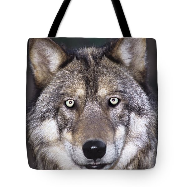 Gray Wolf Portrait Endangered Species Wildlife Rescue Tote Bag by Dave Welling