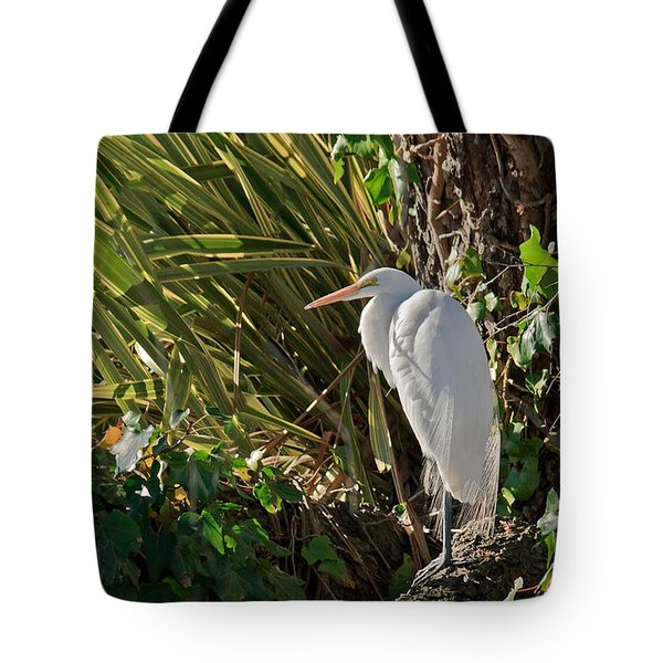 Tote Bag featuring the photograph Great Egret by Kate Brown
