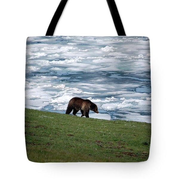 Tote Bag featuring the photograph Grizzly Bear On Frozen Lake Yellowstone by Shawn O'Brien