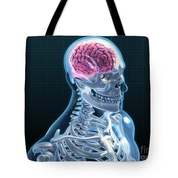 Human Skeleton And Brain, Artwork Tote Bag