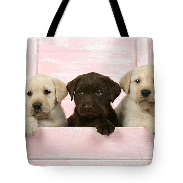 Labrador Retriever Puppies Tote Bag by John Daniels