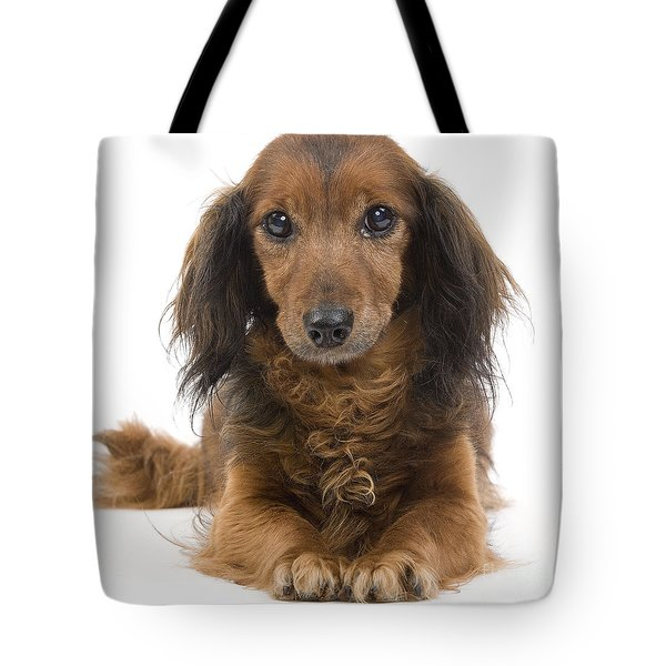 Long-haired Dachshund Tote Bag by Jean-Michel Labat