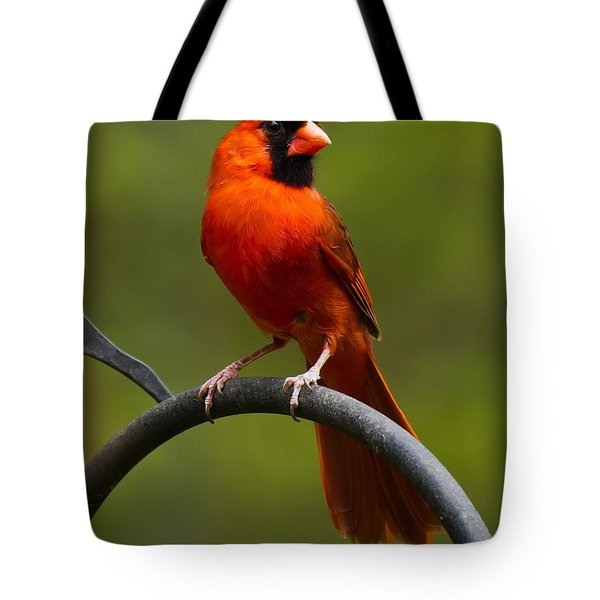 Male Cardinal Tote Bag by Robert L Jackson