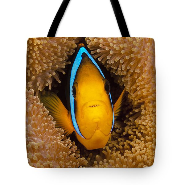 Orange Fin Anemonefish Tote Bag by Dave Fleetham