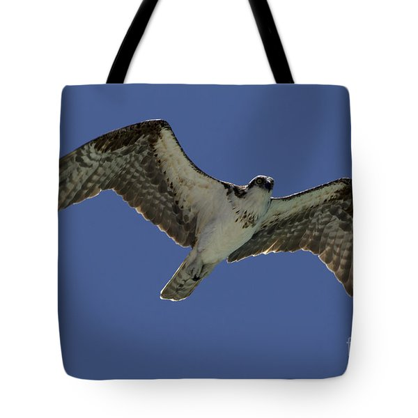 Tote Bag featuring the photograph Osprey In Flight Photo by Meg Rousher