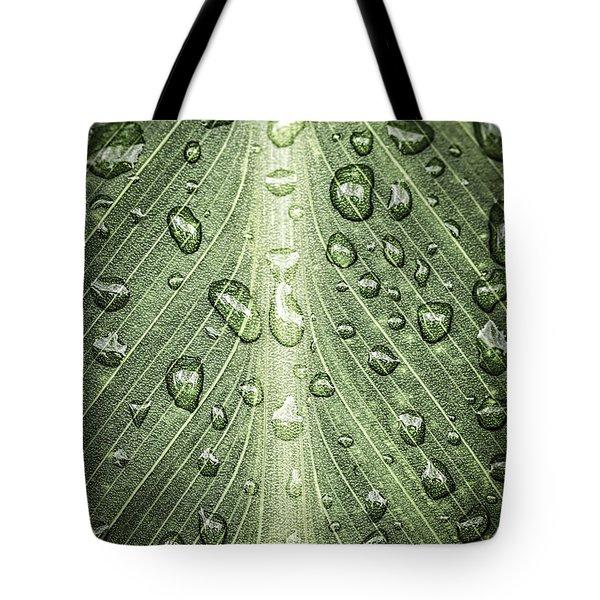 Raindrops On Green Leaf Tote Bag by Elena Elisseeva