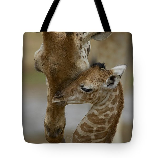 Tote Bag featuring the photograph Rothschild Giraffe And Calf by San Diego Zoo