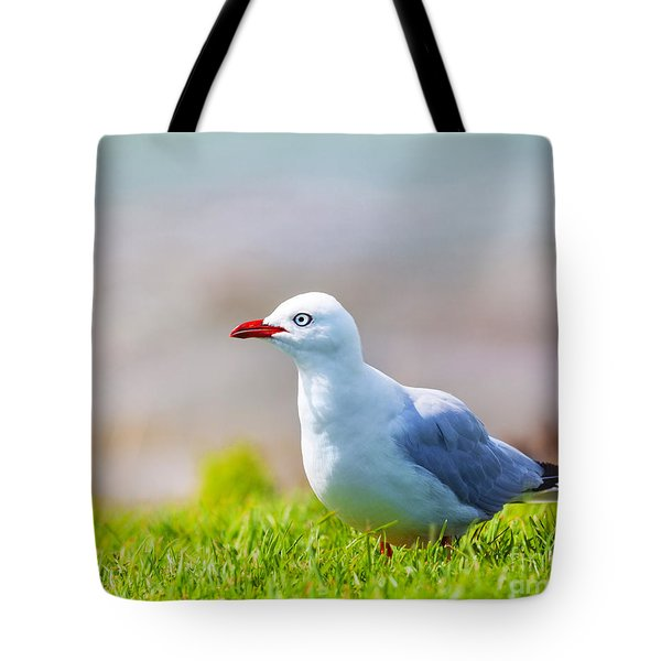 Seagull Tote Bag by MotHaiBaPhoto Prints