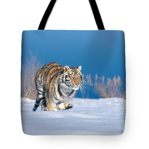 Siberian Tiger Tote Bag by Alan Carey