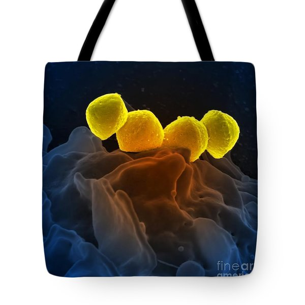 Streptococcus Pyogenes Bacteria Sem Tote Bag