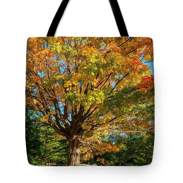 Sugar Maple Tote Bag by Steve Harrington