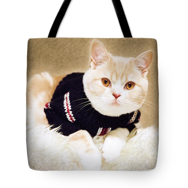 The Cat Wears Sweater Tote Bag by Aiolos Greek Collections