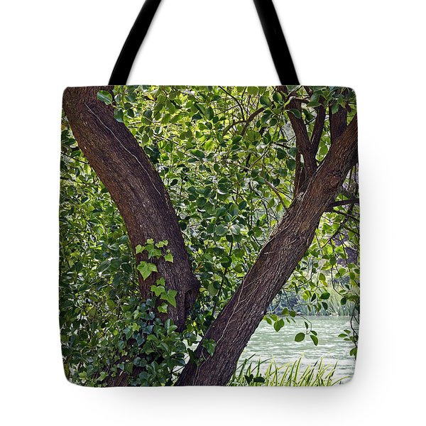 Tote Bag featuring the photograph Tree At Stow Lake by Kate Brown