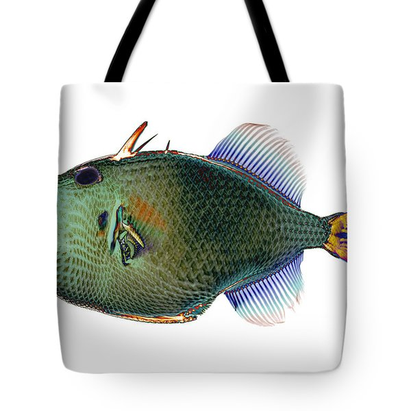 Triggerfish X-ray Tote Bag by D Roberts