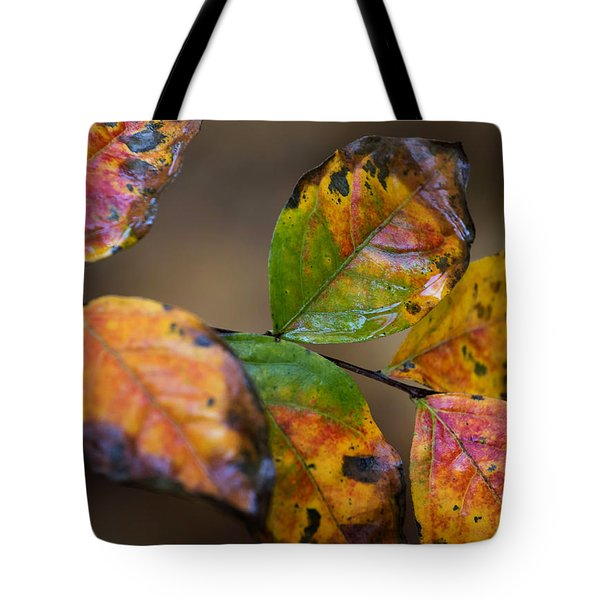 Turning Leaves Tote Bag by Stephen Anderson
