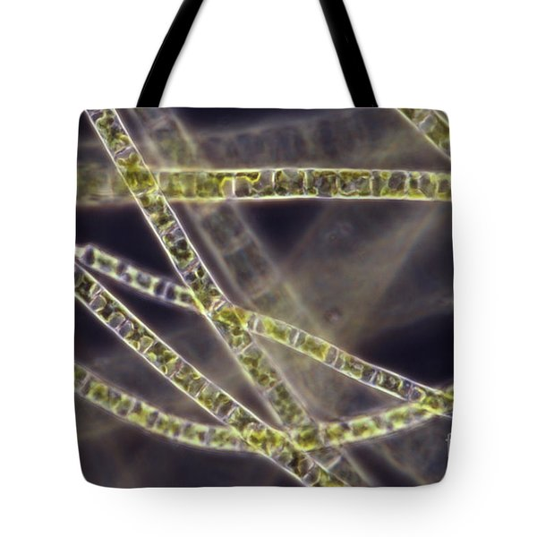 Ulothrix Sp. Algae, Lm Tote Bag by David M. Phillips