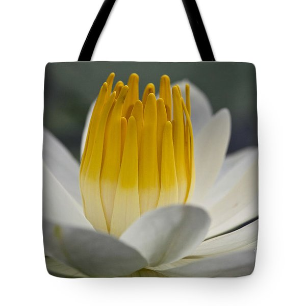 White Water Lily Tote Bag by Heiko Koehrer-Wagner