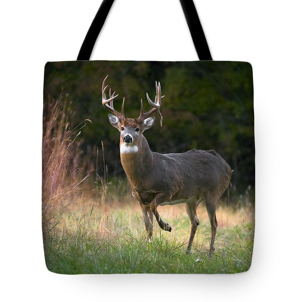 Whitetail Deer In Rut Tote Bag