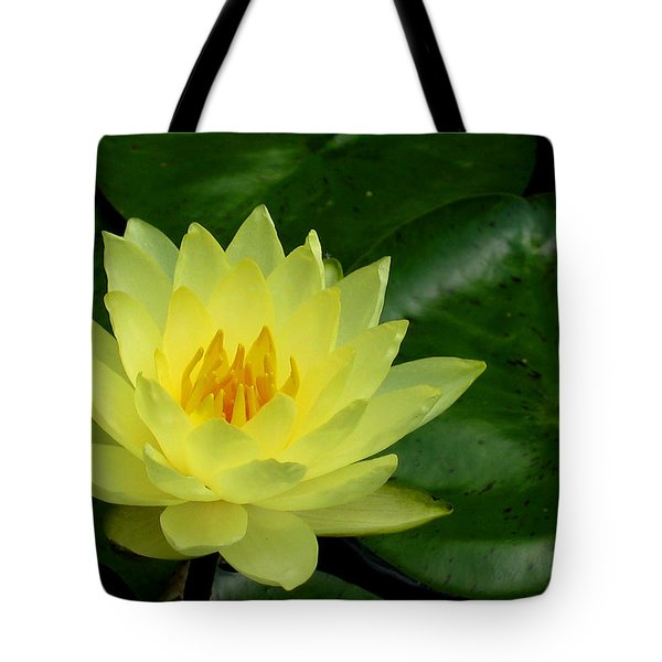 Yellow Waterlily Flower Tote Bag by Eva Kaufman