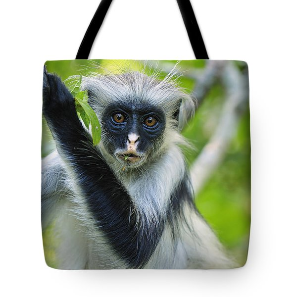 Zanzibar Red Colobus In Tree Jozani Tote Bag