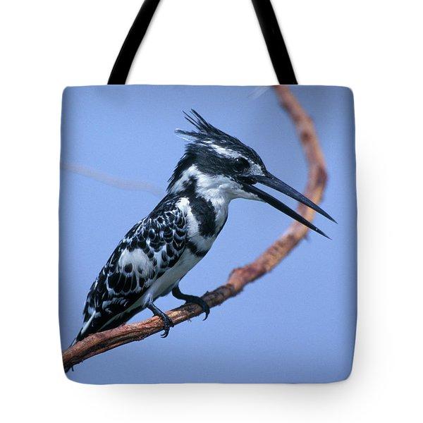 2000s Pied Kingfisher Ceryle Rudis Tote Bag