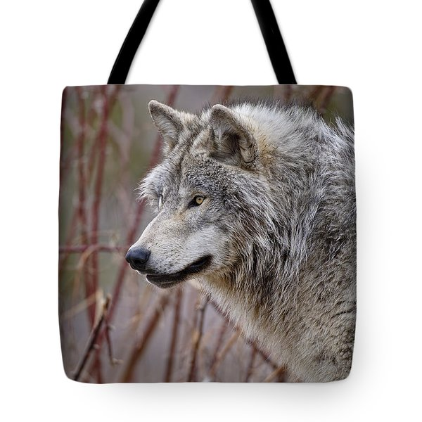 Timber Wolf Pictures Tote Bag