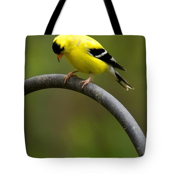 American Goldfinch Tote Bag by Robert L Jackson
