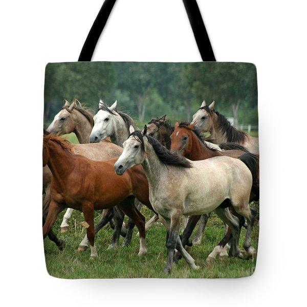 Arabian Horses Tote Bag by Angel  Tarantella