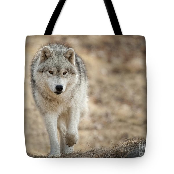 Tote Bag featuring the photograph Arctic Wolf by Wolves Only