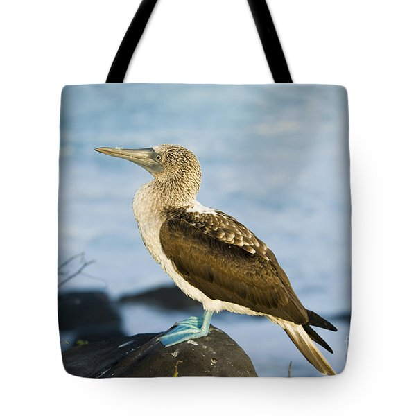 Blue-footed Booby Tote Bag