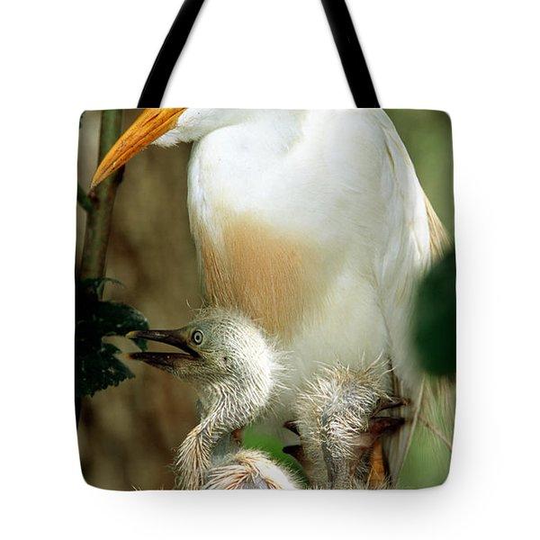 Cattle Egret And Nestlings Tote Bag