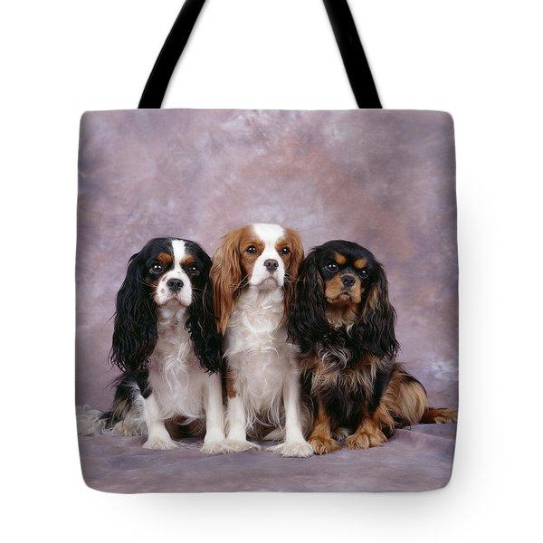 Cavalier King Charles Spaniels Tote Bag