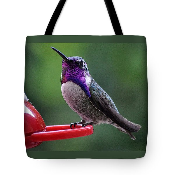Tote Bag featuring the photograph Juvenile Male Costa by Jay Milo