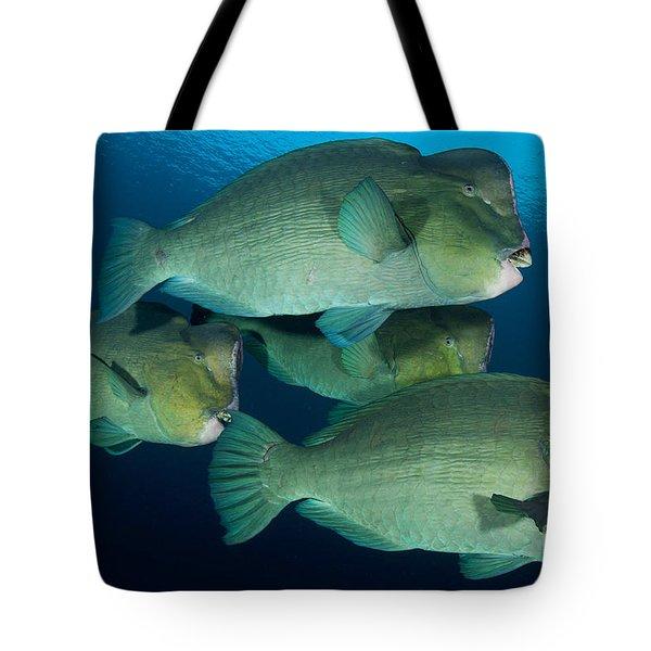 Large School Of Bumphead Parrotfish Tote Bag by Steve Jones