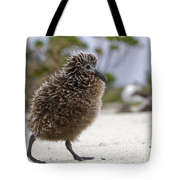 Laysan Albatross Chick Tote Bag