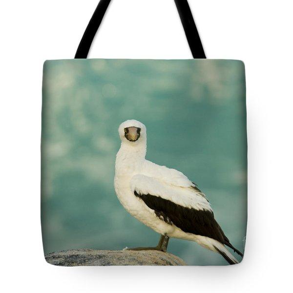 Nazca Booby Tote Bag