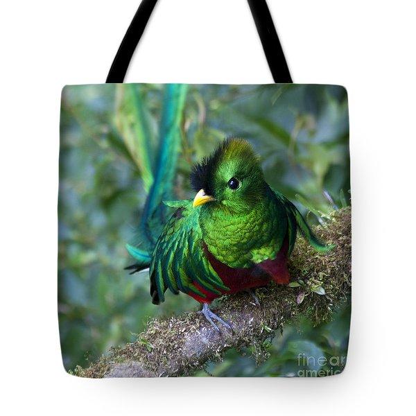 Quetzal Tote Bag