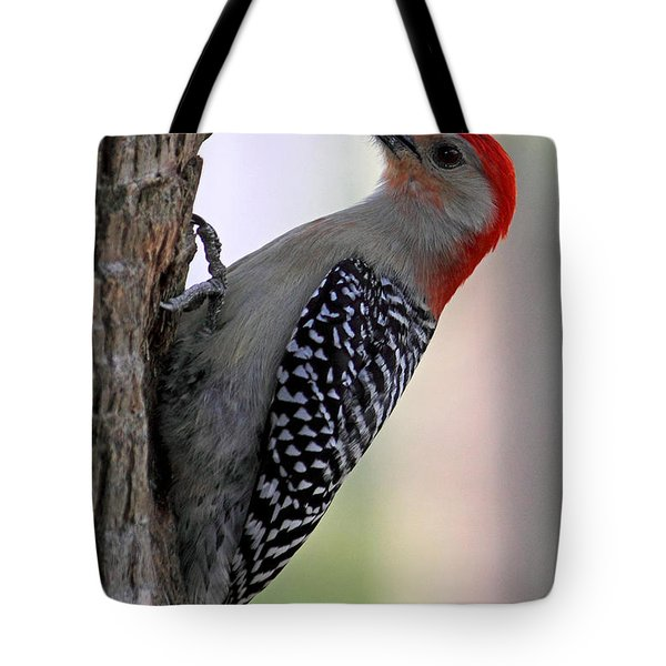 Tote Bag featuring the photograph Red Bellied Woodpecker  by Meg Rousher