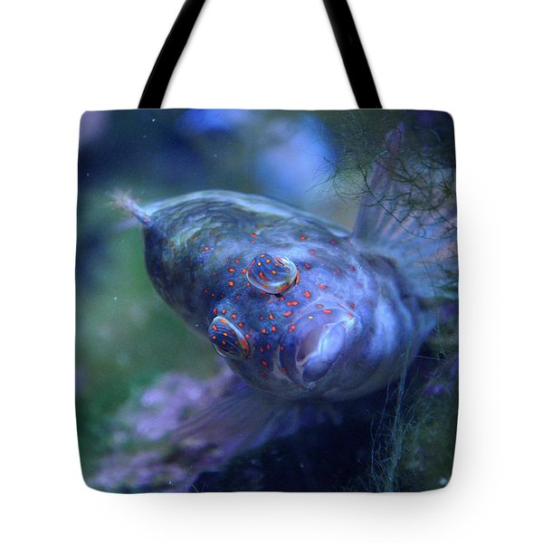 Tote Bag featuring the photograph Redspotted Hawkfish  by Savannah Gibbs